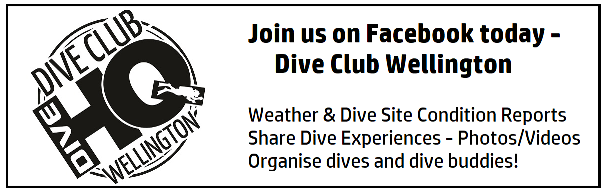 Dive Club Wellington